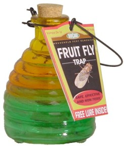 Springstar Fruit Fly Trap